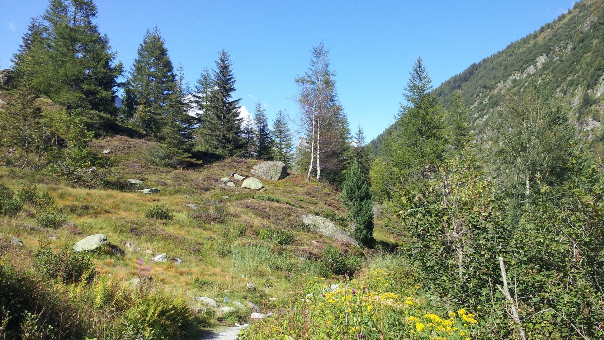 Objectif Trail